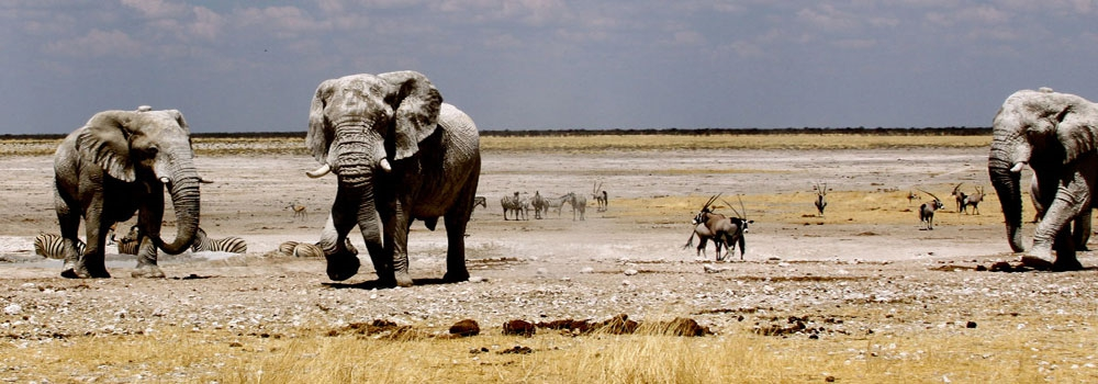 Day 6 - Etosha National Park