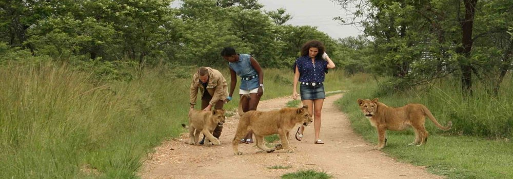 Day 2 - Walk with lions